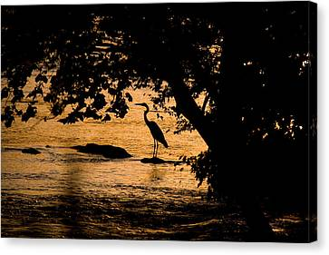 Blue Heron At Sunset Canvas Print by Andy Lawless