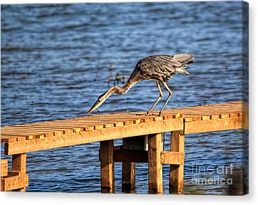 Blue Heron Dragonfly Lunch Canvas Print