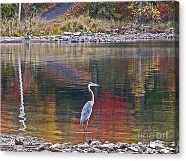 Blue Heron In Autumn Canvas Print
