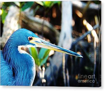 Blue Heron Canvas Print by Judy Via-Wolff