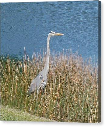 Canvas Print featuring the photograph Blue Heron by Kristine Bogdanovich
