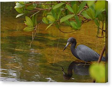 Blue Heron Canvas Print by Mark Russell