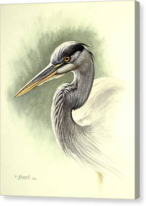 Blue Heron   Canvas Print by Paul Krapf