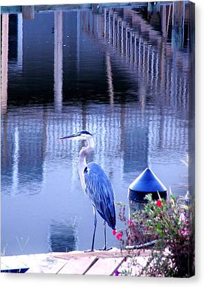 Blue Heron Reflections Canvas Print by Kim Bemis