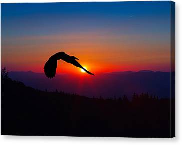 Blue Heron Rising With The Sun Canvas Print