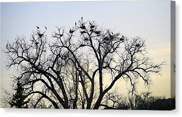 Blue Herons Canvas Print