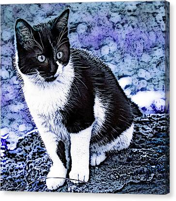 Canvas Print featuring the photograph Blue Hindy by Selke Boris