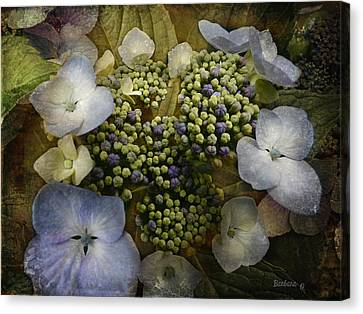 Canvas Print featuring the photograph Blue Hydrangea by Barbara Orenya