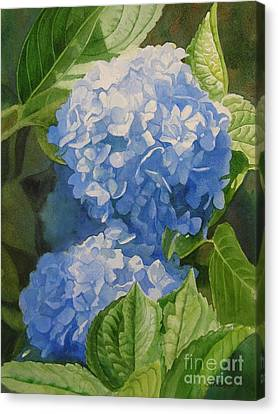 Blue Hydrangea Blossoms Canvas Print by Sharon Freeman