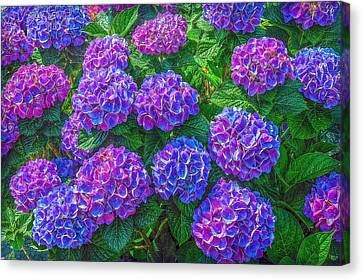 Canvas Print featuring the photograph Blue Hydrangea by Hanny Heim
