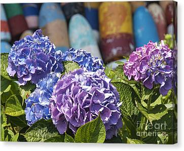 Blue Hydrangea Canvas Print by Juli Scalzi