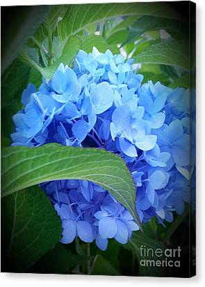 Blue Hydrangea Canvas Print by Rose Wang