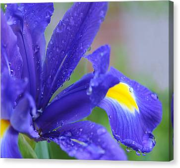 Canvas Print featuring the photograph Blue Iris by Haleh Mahbod