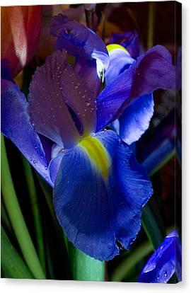 Blue Iris Canvas Print by Joann Vitali