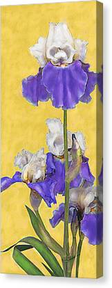 Blue Iris On Gold Canvas Print by Jane Schnetlage
