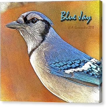Canvas Print featuring the photograph Blue Jay by A Gurmankin