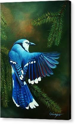 Blue Jay Canvas Print by Jean Yves Crispo