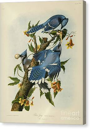 Heron Canvas Print - Blue Jay by Celestial Images