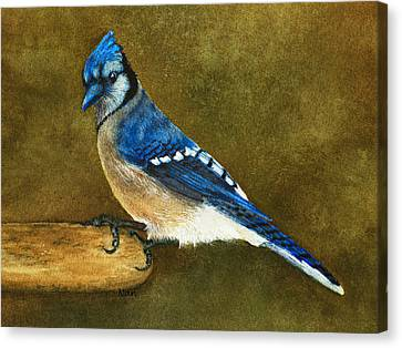 Jay Canvas Print - Blue Jay by Nan Wright