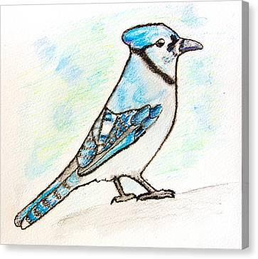 Bluejay Canvas Print - Blue Jay by Pati Photography
