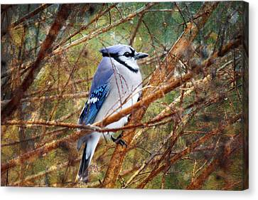 Canvas Print featuring the photograph Blue Jay by Trina  Ansel
