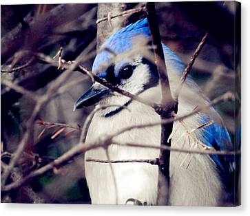 Canvas Print featuring the photograph Blue Joy by Zinvolle Art