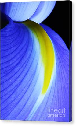Canvas Print featuring the photograph Blue by Judy Whitton