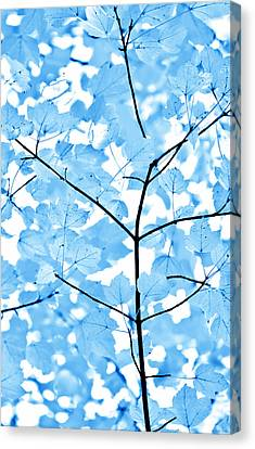 Canvas Print featuring the photograph Blue Leaves Melody by Jennie Marie Schell