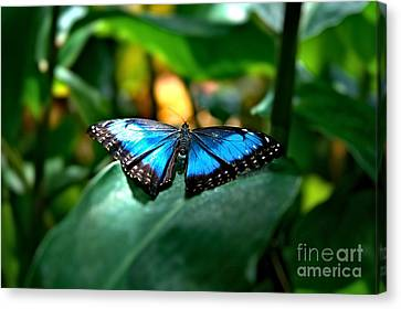 Blue Lit Butterfly Canvas Print