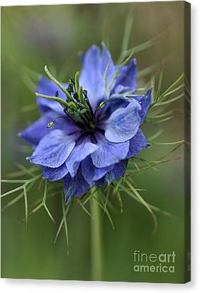 Canvas Print featuring the photograph Blue Love by Joy Watson