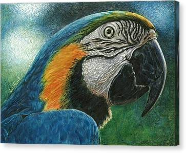 Blue Macaw Canvas Print by Sandra LaFaut