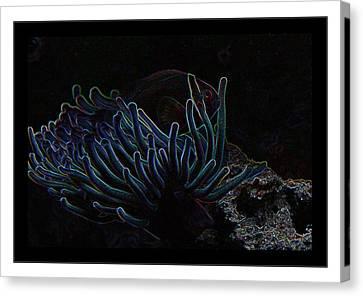 Blue Magic Light Fish  Canvas Print