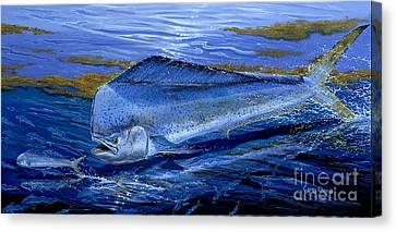 Blue Mahi Off0071 Canvas Print by Carey Chen