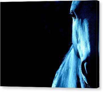 Blue Majesty.. Canvas Print