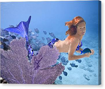 Canvas Print featuring the photograph Blue Mermaid by Paula Porterfield-Izzo