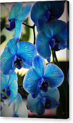 Orchids Canvas Print - Blue Monday by Mandy Shupp