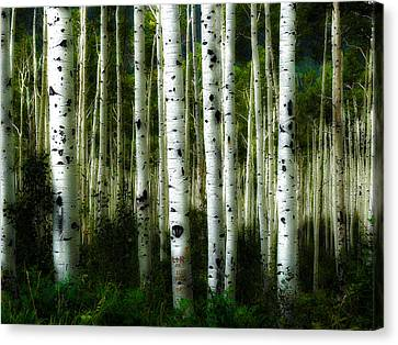 Canvas Print featuring the photograph Blue Mood Aspens I by Lanita Williams