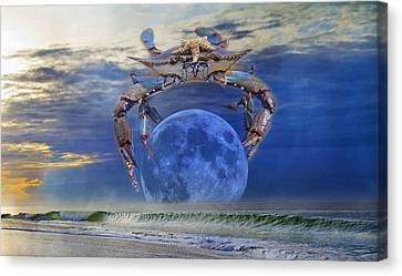 Blue Moon Crab Canvas Print by Betsy Knapp