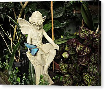 Blue Morpho On Statue Canvas Print