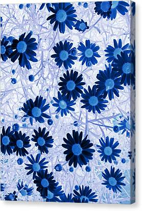 Canvas Print featuring the digital art Blue Mystical Daisies  by Sandra Foster