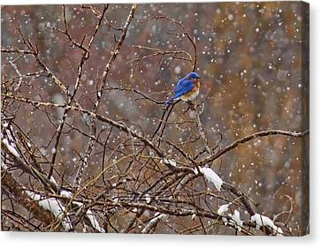 Canvas Print featuring the photograph Blue Norther by Gary Holmes