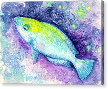 Blue Parrotfish Canvas Print by Ashley Kujan