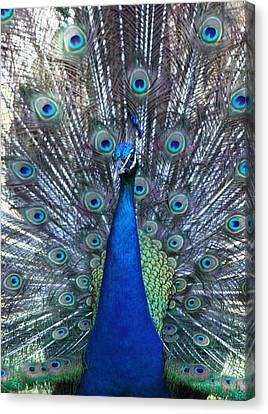 Blue Pearl Of Nature Canvas Print