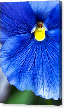 Blue Petal Canvas Print by Crystal Hoeveler