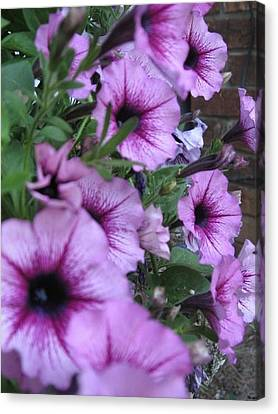 Blue Petunias Canvas Print