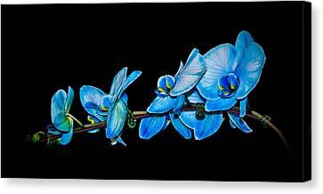 Blue Phalaenopsis Orchid Canvas Print