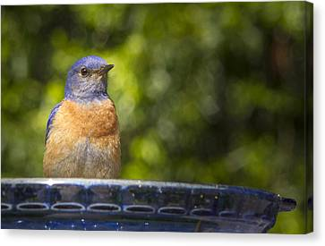 Blue Plate Special Canvas Print by Jean Noren