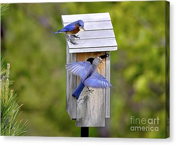 Canvas Print featuring the photograph Blue Plate Special by Nava Thompson
