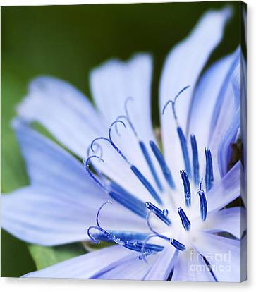 Blue Poetry.. Canvas Print