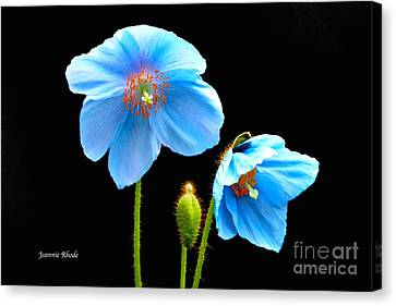 Blue Poppy Flowers # 4 Canvas Print by Jeannie Rhode